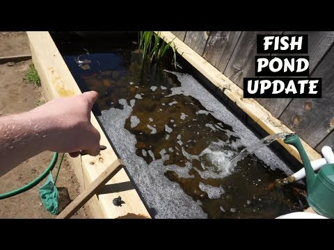 Homemade Fish Pond Update #6 ~ (Good news and bad news...)