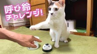 Download 【検証】お手ができる猫は呼び鈴を使いこなせるのか!? Video