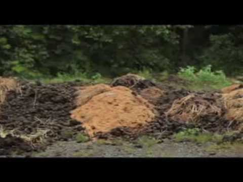 Using Compost as Horse Stall Bedding