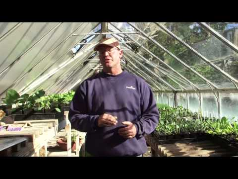 How to Prepare a Vegetable Garden