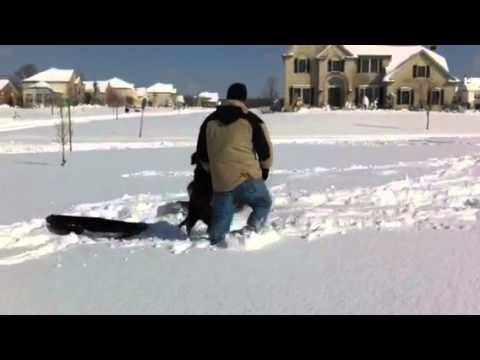 Dog powered sled