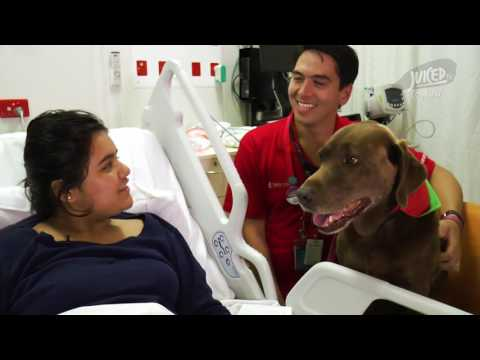 Indy the Pet Therapy dog