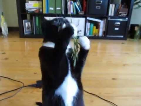 Best Treat for Indoor Cats