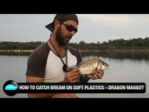 How To Catch Bream On Soft Plastic Lures | We Flick Fishing Videos