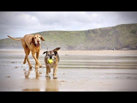 Max & Pip Harlyn Bay, Cornwall.  21.10.17