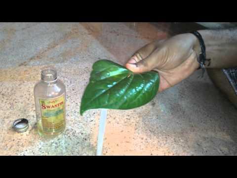 Boil treatment using Betel leaf - Easy home remedy.
