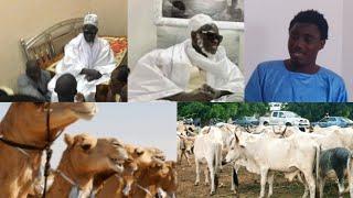 Magal à Touba, Wally Seck distribue des chameaux et des bœufs et fait...