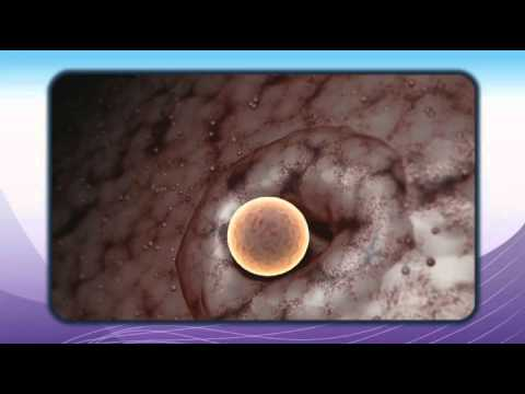 The Science Behind Ovulation and Conception