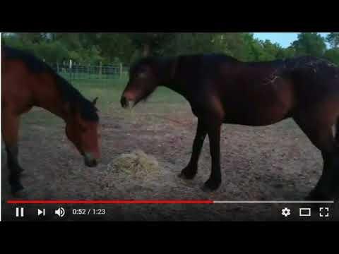 Horsy Language & Herd and Horse Behavior - The Subtle Language of Horses