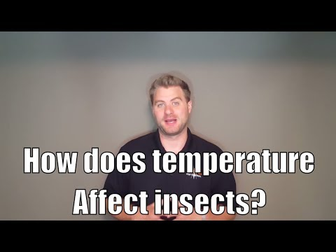 How does temperature affect insects?