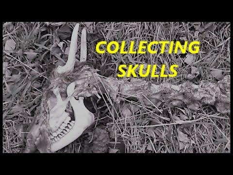 Collecting Deer Skulls and MOAR!