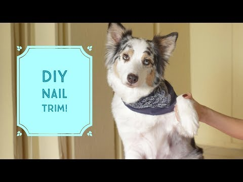 TRIMMING YOUR DOGS NAILS SAFELY!