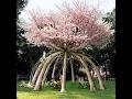 Live tree ART inspiration Ideas
