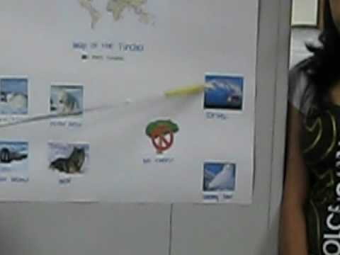 The Arctic Tundra Biome (biology project)