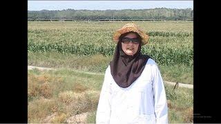 شرکت کشت و صنعت هزارجلفا                                   Iran Industrial Agriculture Company