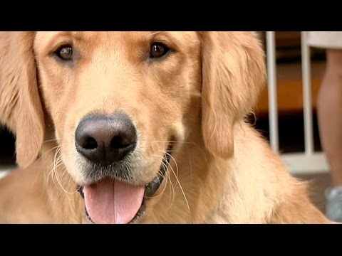 One Vision - A Guide Dog Documentary