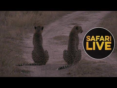 safariLIVEs: Episode 9