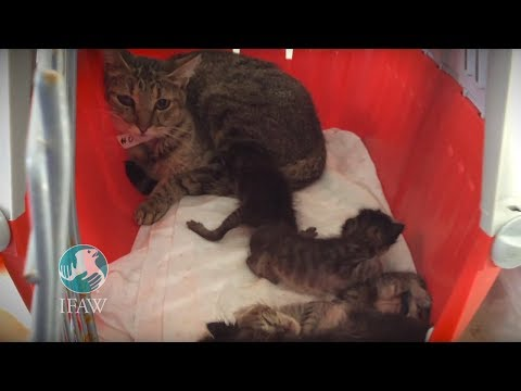 Cats Rescued From Hoarding Case