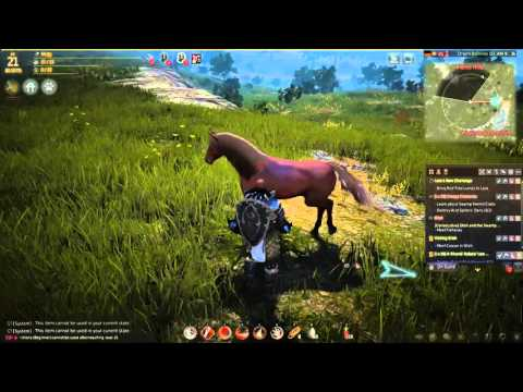 Black Desert Online - How to Tame a Horse