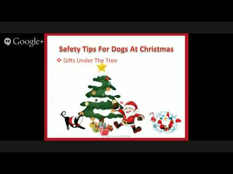 Safety Tips for Dogs At Christmas - Christmas Tree (5 of 5)