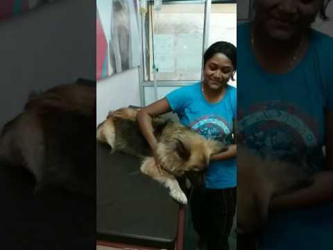 Regular Clients of Pluto Pet Clinic, Ranchi