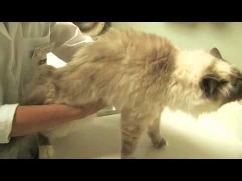 How to Prevent a Cat From Sneezing