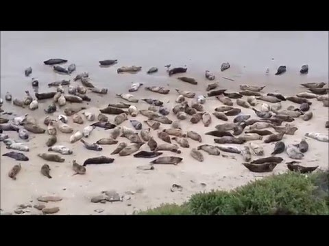 The Carpinteria Seal Santuary