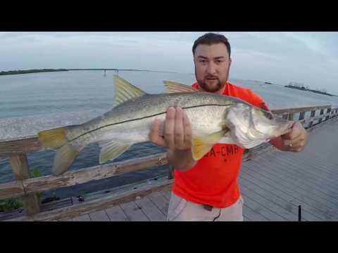 Summer pier fishing Snook in Florida (Placida Fishing Pier)