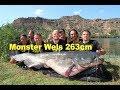 Monster Wels 263cm 120 Kilo Monster Catfish 863 Feet 26455 Pounds Welsangeln Wallerangeln