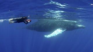 Humpback Whales   JONATHAN BIRD