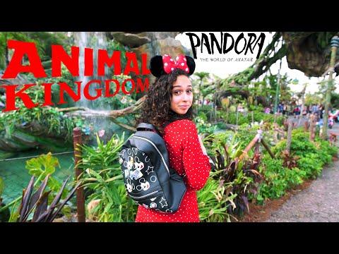 ANIMAL KINGDOM // 6 Hard to Find Hidden Mickeys