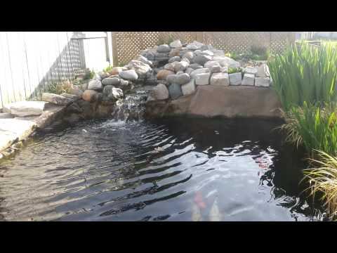 Koi pond may 2013