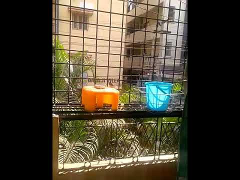 Water and food for birds in hot summer
