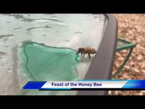 Louisiana Honey Bee Feeds on Spell Family Blue Cotton Candy Sno-Ball Syrup