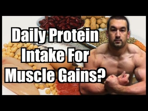 Daily Protein Intake: How Much Protein To Build Muscle?