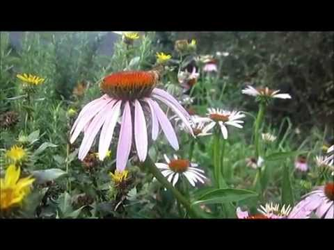 Planting Flowers for Honey Bees