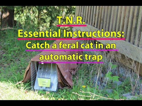TNR Essential Instructions: Catch a feral cat in an automatic trap
