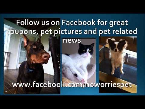 Nazareth Pet Sitter, Daily Dog Walker, Pet Care for Elderly and Diabetic Pets