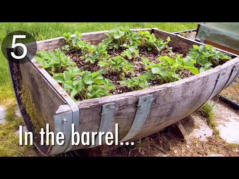 10 Quirky Ways to Grow Strawberries