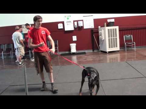 Aggressive Dog Behavior (Episode 1)
