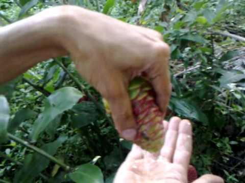 Secret of Healthy soil : Carbon hoarding