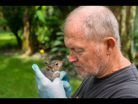 Feeding an Orphaned Baby Squirrel