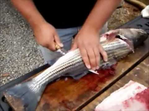 How to clean a striped bass