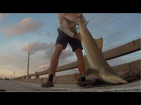 Bridge Fishing - How to