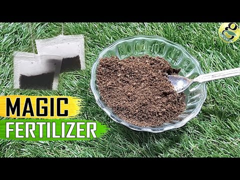 TEA WASTE FERTILIZER: Used Tea Bags Coffee Grounds for Plants | Organic Best Fertilizer for Rose