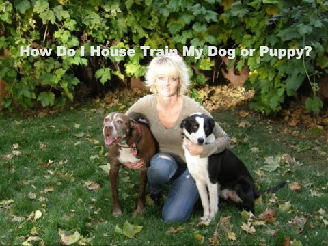 House Train Your Dog In Minutes! Frustrated with Potty Training?