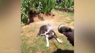 Funny Dog Vines 2014