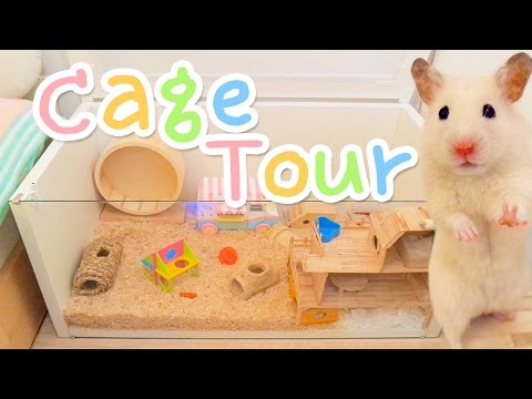 Cage Tour 🌈 Vanilla's new home!