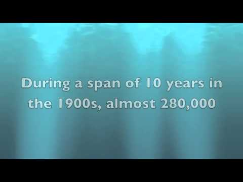 Blue whale endangered