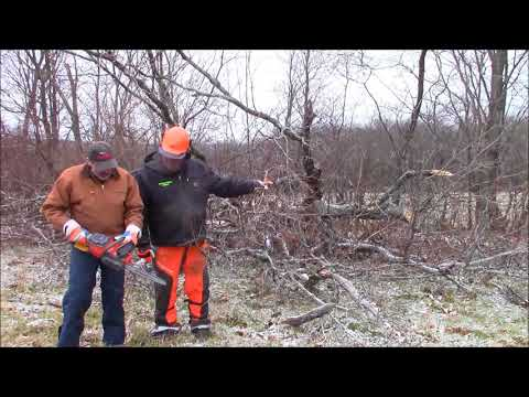 Husqvarna120i Battery Powered Chainsaw. Are these Saws Useful? A First Impression?